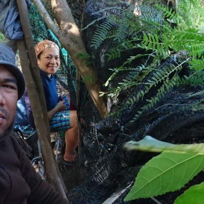 Ayutthaya: Pied Kingfisher