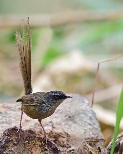 Joys of Birding